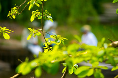 Afternoon Conversation-4874 (MVMoorePhotography) Tags: spring dof durham dukegardens