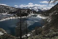 Panorama del lago del Devero (Ciak88) Tags: panorama mountain lake snow alps verde primavera ice nature water lago spring nikon natura neve acqua alpi montagna mou ghiaccio d5300