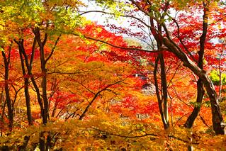 紅葉の常寂光寺 / Jyoujyakkou-ji Temple