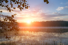 Sunrise at lake Patajrvi (laurilehtophotography) Tags: sunrise lake patajrvi suomi finland nikon d3100 nikkor 1755mm f28g trees sky forest water reflections morning fog mist clouds leafs nature naturephotography nikonphotography