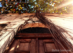 Casa velha (Stefan Lambauer) Tags: door old sun sunlight house tree abandoned home downtown velha porto santos porta root maison 2016 valongo stefanlambauer