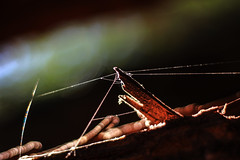 IMG_8010 (dafloct) Tags: tela araa tronco naturaleza canon t5 50nn 50mm chile concepcion biobio macro resina outdoor parque ecuador victor lamas atardecer arboles three nice shot best sun daylight
