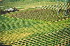 preparing the vines (ivvy million) Tags: green germany deutschland countryside europa europe hills vineyards rlp rheinlandpfalz weinberge rhinelandpalatinate nahetal niederhausen naheland norheim 18105mm nikond7100 ivvymillion