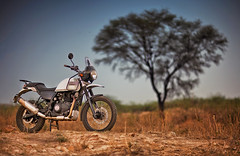 Royal Enfield Himalaya - ready for adventure! (The Canon Fanboy) Tags: india canon photography photo photographer delhi automotive traveller professional motorcycle himalayan royalenfield bokehlicioud beyondbokeh