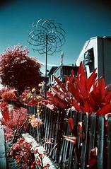 Kinetic Wind Ornament (analoguefilm) Tags: film 35mm minolta kodak outdoor infrared venicebeach colorinfrared venicecanals filmphotography fpp x570 colorinfraredfilm f135 aerochrome vivitar28mmf25 pakon kodakaerochrome infrachrome nexlab