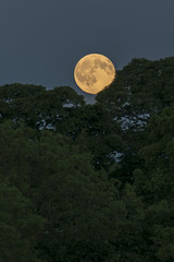 Strawberry Moon Rising Over Midlothian (Colin Myers Photography) Tags: summer moon colin photography scotland countryside strawberry village country harvest scottish full fullmoon moonrise myers midlothian strawberrymoon colinmyersphotography wwwcolinmyerscom