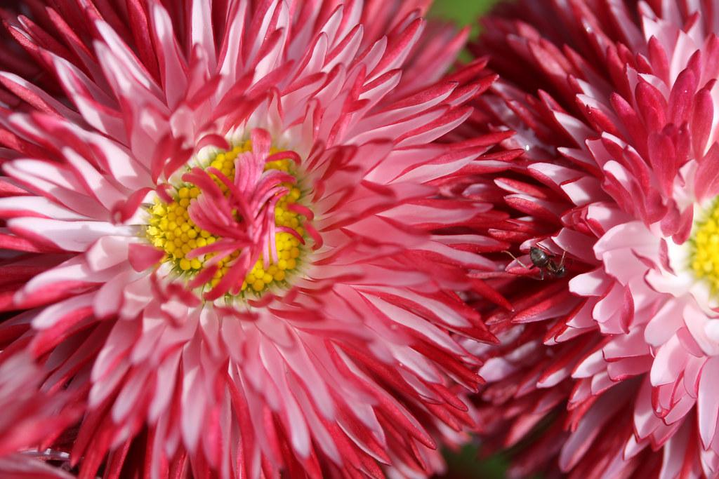 the world 39 s best photos of flower and lens00025 flickr hive mind. Black Bedroom Furniture Sets. Home Design Ideas