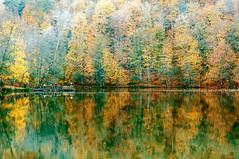 Yedigoller, Bolu (Nejdet Duzen) Tags: travel autumn lake nature forest turkey nationalpark colours trkiye bolu gl orman turkei sonbahar seyahat doa yedigller renkler millipark gz reflectionyansma