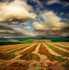 Endless view (Katarina 2353) Tags: summer landscape hill fields serbiainspired