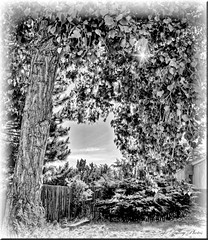 Looking Through (Oh Ya, Winter's Here..Bring Snow Plz!) Tags: trees sky tree fence scene trunk hanging hedges
