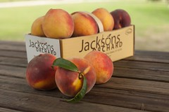 Cresthaven-8140 (Jackson's Orchard) Tags: kentucky peach orchard bowlinggreen bowlinggreenky cresthaven jacksonsorchard