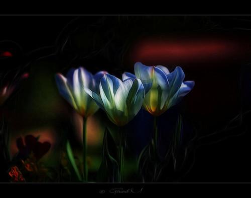 """Les parfums sont  les sentiments des fleurs.   """" Heinrich Heine """""""