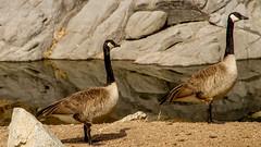 The couple (Elespics) Tags: arizona lake nature water watsonlake granitedells