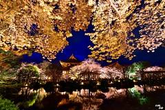 (Clonedbird  & Iris ) Tags: tower japan temple nikon kyoto  cherryblossom  sakura  toji    2016      d810