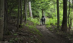 Mastik (bulbocode909) Tags: nature vert arbres printemps chiens montagnes sentiers forts