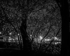 Midnight Walk (Oso Azul Design) Tags: trees reflection water night blackwhite streetlight riverside memorialbridge missouririver fujix70