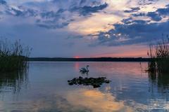 _DSC1878-1_web (oolcgoo) Tags: sunset lake berlin clouds germany deutschland see swan europa europe sonnenuntergang sundown sony wolken tokina adobe pro alpha schwan slt amount tegel dx2 apsc a77mii