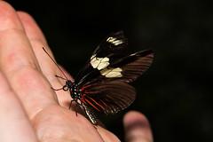 Handheld.... (EugeneEverson) Tags: uk warrington victoriapark cheshire widnes butterflyhouse moorecameraclub