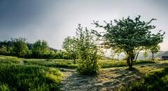 Meadow Light (Elliott Bignell) Tags: italien italy tree evening abend italian italia meadow wiese cairo baum italie hawthorn blackthorn italienisch abendstimmung rosaceae abendlicht dego ital montenotte piandellacanepa ciandellacana