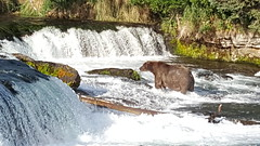 Brooks Falls in Katmai NP - Alaska - neither of us were going to try to get in THIS shot!
