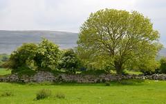 Corcomroe Abbey XV (N. S. Gittings) Tags: ireland countyclare corcomroeabbey tamron18270mm nikond7000