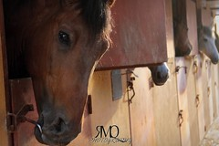 Caballo intentando escapar // Horse trying to escape (Marina Quilon Photography) Tags: horses horse caballo cheval atardecer caballos evening cavalos stable cavalo pferd chevaux cuadra