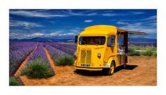 Un Citron dans la lavande (2) (Olivier Faugeras) Tags: pentax citroen lavender provence lavande valensole