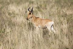 _MG_7078 (farhan1mirza) Tags: wild nature animal canon kenya wildlife 6d nnp nairobinationalpark