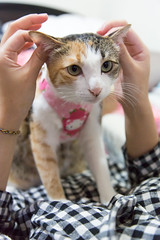 20140129-IMG_1405 (Noelas) Tags: pet cat canon eos is momo taiwan mo 01 l 5d 29 dslr   ef f4    2014 24105 yunlin markiii  24105mm 24105l  canonef24105mmf4lisusm  241054lis l  241054 canoneos5dmarkiii 5d3