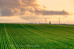 _A5B4207-4.jpg (w11buc) Tags: sunset field evening farm seed crop fields agricultural stcombs