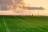 _A5B4207-4.jpg (w11buc) Tags: sunset field evening farm seed crop fields agricultural stcombs