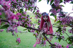 Rochelle hiding in the cherry tree (~Loona~) Tags: monster high doll signature gargoyle granite rochelle goyle scaris