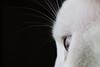 Sobre o espelho (. Ree .) Tags: cats pets window espelho cat canon photography rebel mirror foto pics compositions sp gato janela fotografia animais adoção gatobranco branconopreto fotosdegatos trabalhovoluntário repics canonsl1 gatosejanelas guarulhs