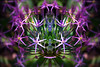 Assimilated 2 (Tau Zero) Tags: flower allium digitalmirror zombieflower