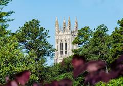 Duke Chapel, Durham, North Carolina (knoxnc) Tags: trees sunlight architecture spring nikon durham northcarolina depthoffield dukegardens dukechapel 2016 carolinablueskies d5100