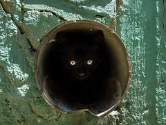 The cat (Teo Karanikas) Tags: portrait black beauty animal animals cat eyes kitten sony pipe kitty kittens greece thessaloniki