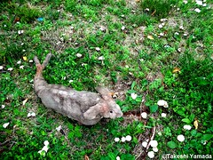 Dr. Takeshi Yamada and Seara (Coney Island Sea Rabbit) in the Pine Barrens of New Jersey during the Jersey Devil Expedition on June 20, 2016. mushrooms. 20150620 022=-3060== (searabbits23) Tags: ny newyork sexy celebrity rabbit art hat fashion animal brooklyn asian coneyisland japanese star tv google king artist dragon god vampire manhattan famous gothic goth uma ufo pop taxidermy vogue cnn tuxedo bikini tophat unitednations playboy entertainer oddities genius mermaid amc mardigras salvadordali performer unicorn billclinton seamonster billgates aol vangogh curiosities sideshow jeffkoons globalwarming mart magician takashimurakami pablopicasso steampunk damienhirst cryptozoology freakshow leonardodavinci seara immortalized takeshiyamada roguetaxidermy searabbit barrackobama ladygaga climategate  manwithrabbit