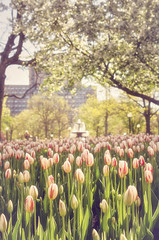 Tiptoe Through the Tulips (flashfix) Tags: park flowers trees ontario canada building green nature fountain floral yellow garden lights nikon downtown cyclist tulips bokeh ottawa blossoms 40mm mothernature tulipfestival vast 2016 d7000 2016inphotos treesconfederation may172016