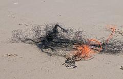 Filigran / Filigree (schreibtnix) Tags: red sea black travelling rot beach netherlands strand sand reisen meer structures schwarz niederlande callantsoog strukturen alluvial angeschwemmt olympuse5 schreibtnix
