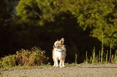 Delta Breeze (sonstroem) Tags: dog wind breeze deltabreeze