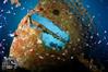 Sea Hawk Wreck (ShaunMYeo) Tags: scubadiving wreck gibraltar wrecks calpe underwaterphotography جبل gibilterra ikelite artificialreef طارق גיברלטר 直布罗陀 гибралтар γιβραλτάρ gibraltár الطارق cebelitarık gjibraltar ĝibraltaro hibraltar xibraltar giobráltar gibraltārs gibraltaras ġibiltà जिब्राल्टर ஜிப்ரால்டர் జిబ్రాల్టర్ ยิบรอลตา جبرالٹر גיבראַלטאַר गिब्राल्टर জিব্রাল্টার 直布羅 陀જીબ્રાલ્ટર ジブラル seahawkwreck