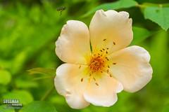 Gainesville Botanical Garden (The Suss-Man (Mike)) Tags: flowers flower nature georgia dof unitedstates bokeh gainesville botanicalgarden hallcounty bokehlicious thesussman sonyslta77 sussmanimaging gainesvillebotanicalgarden atlantabotanicalgardeningainesville