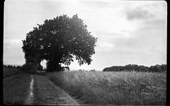 (salparadise666) Tags: bw white black germany landscape hannover nils f land 6x9 pan ilford voigtlnder avus calenberger volkmer