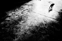 R0022470 (kenny_nhl) Tags: life street shadow bw black monochrome cat dark photography photo blackwhite shot 28mm streetphotography surreal scene snap explore malaysia visual ricoh provoke grd explored streephotography grd4 grdiv