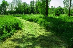 FA_015 (Dutch_Chewbacca) Tags: nature netherlands spring fort sunny dijk brabant 1877 landschap 1880 waterlinie nieuwe 1847 altena brabants hollandse uppel gantel uppelse schanswiel
