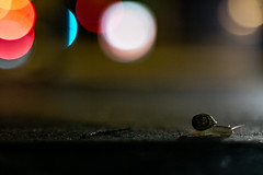 Snail in the City... (Lens a Lot) Tags: paris | 2016 lzos zenit jupiter9 85mm 2  9 15 blades aperture preset lens 1992 m42 mount f28 bokeh depth field colors blue red white orange yellow purple light close up vintage russian manual prime wow street photography