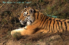 WBY048-15 F828 Who dares to ride on tiger (wbyoungphotos) Tags: chicken live sony tiger riding f828 guides contented wbyoungphotos