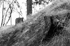 Do you See It? (Adrian Burlaza) Tags: blackandwhite bw tree stump doyouseeit canon50 canon1dmkiv 50fiftychallenge