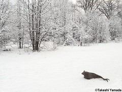 Seara (sea rabbit) on the snow covered ground on March 21, 2015. The Northeastern United States experienced another very cold (far below average temperature) and longer winter months during 2014 and 2015. New York. 20150321 026=4030sgC (searabbit22) Tags: food ny newyork sexy celebrity art hat fashion animal brooklyn painting asian coneyisland japanese star costume tv google king artist dragon god cosplay manhattan wildlife famous gothic goth performance pop taxidermy cnn tuxedo bikini tophat unitednations playboy entertainer takeshi samurai genius mermaid amc johnnydepp mardigras salvadordali unicorn billclinton billgates aol vangogh curiosities sideshow jeffkoons globalwarming takashimurakami pablopicasso steampunk yamada damienhirst cryptozoology freakshow barackobama seara immortalized takeshiyamada museumofworldwonders roguetaxidermy searabbit ladygaga climategate minnesotaassociationofroguetaxidermists
