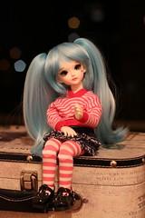 IMG_8213 (Emma Wolf) Tags: doll bjd customblythe obitsucustom classydoll dimdolllarina mystickids zinnadollmore